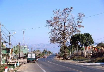 Uốn đường quốc lộ để giữ cây gạo cổ thụ theo ý người dân