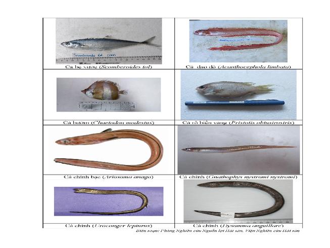 154 loại hải sản miền Trung khuyến cáo chưa được ăn-P3