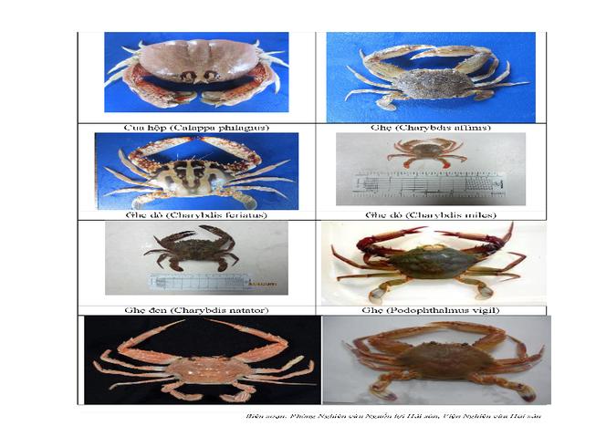 154 loại hải sản miền Trung khuyến cáo chưa được ăn-P9