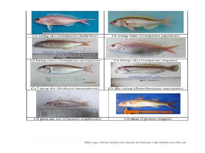 154 loại hải sản miền Trung khuyến cáo chưa được ăn-P5