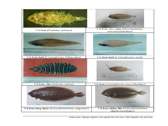 154 loại hải sản miền Trung khuyến cáo chưa được ăn-P6