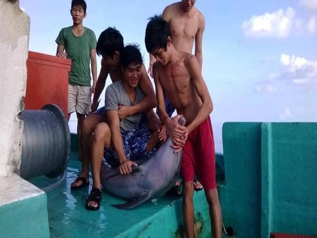 Bắt cá heo rồi cắt đầu, mổ bụng nghi tại Phú Quốc