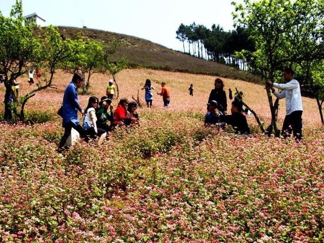 Phát sốt với những đồi hoa tam giác mạch ở Mộc Châu