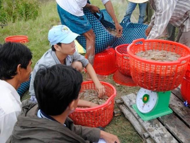 Thương lái Trung Quốc giả khách du lịch thu mua hải sản