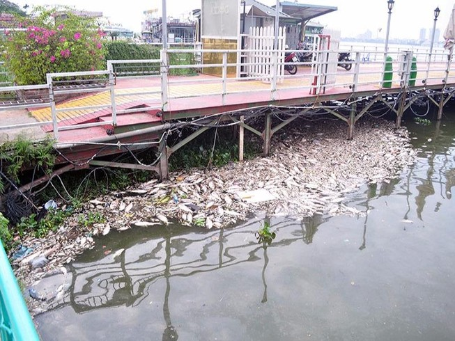 Hà Nội đốc thúc tìm nguyên nhân cá chết ở Hồ Tây