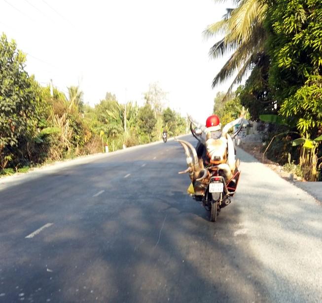 Bán dạo đầu linh dương trên quốc lộ