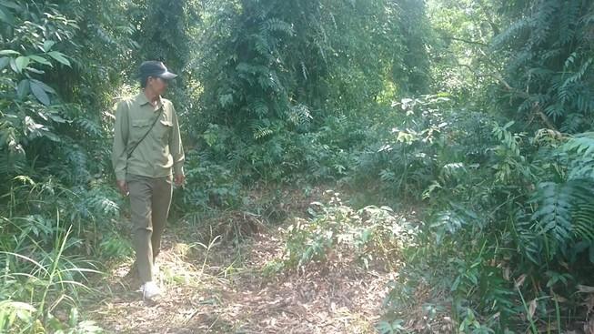 Báo động cháy rừng U Minh Hạ