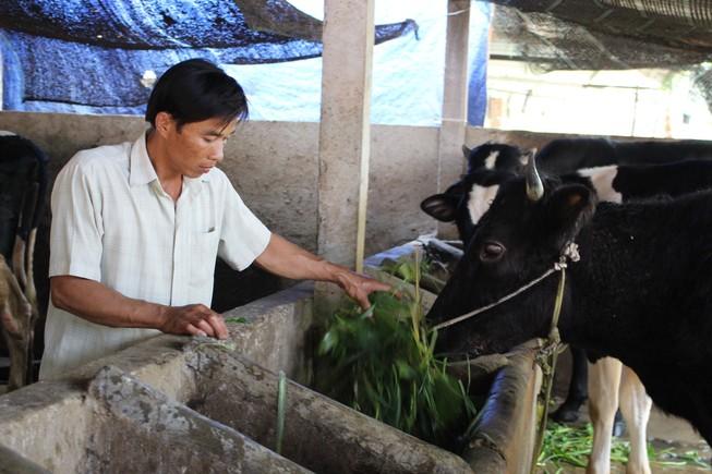Nông dân Củ Chi bị buộc góp vốn xây nhà máy sữa