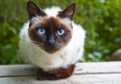 Nàng mèo sống sót kì diệu sau 8 ngày du lịch bằng... đường bưu điện