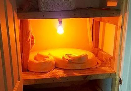 Đột nhiên phát hiện trăn Miến Điện dài 4 m trong tủ sấy