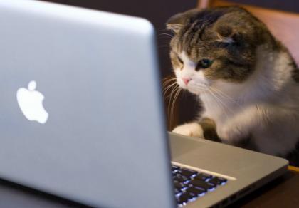 Công nghệ thay đổi cuộc sống loài mèo như thế nào