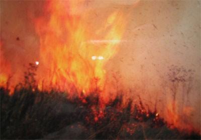 Cháy 15ha rừng vườn quốc gia U Minh Hạ