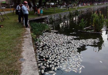 Đà Nẵng: Gần 5 tấn cá chết trắng hồ Công viên 29-3