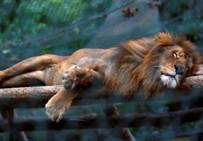 Ảnh: Động vật ở vườn thú Venezuela đói còn 'da bọc xương'
