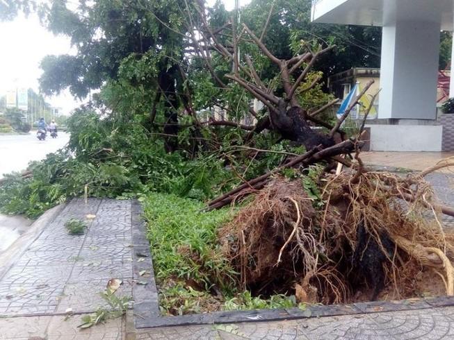Hàng loạt cây xanh ở Huế bị quật gãy trong đêm
