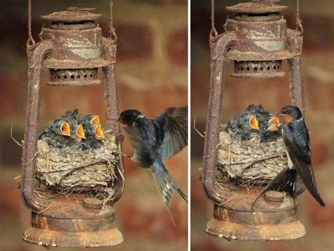 Muôn kiểu bảo bọc con của các loài chim trên thế giới