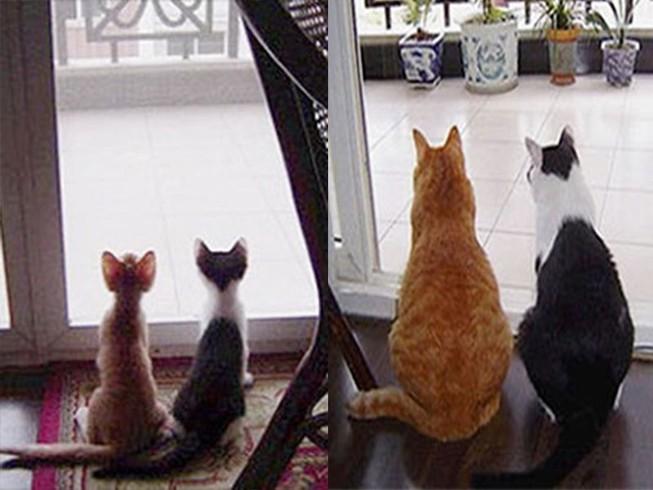Thích thú với những cặp đôi thú cưng lớn lên cùng nhau