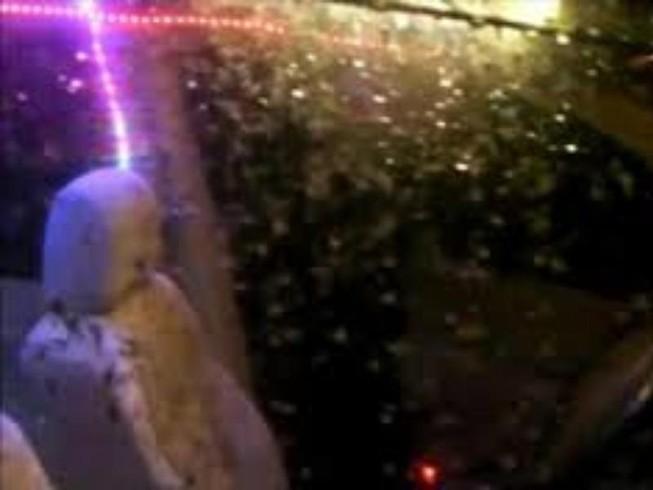 Rợn tóc gáy nhìn hàng ngàn con muỗi bu đen xe hơi