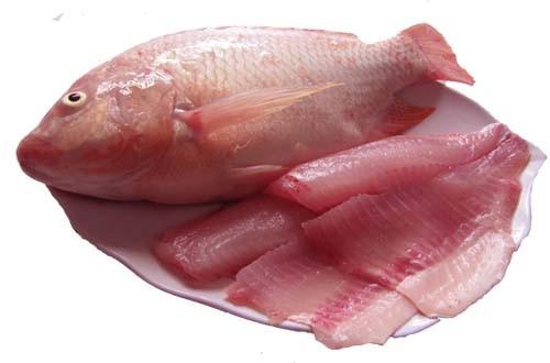 Saigon Food bác thông tin xuất khẩu cá điêu hồng nhiễm kháng sinh sang Úc