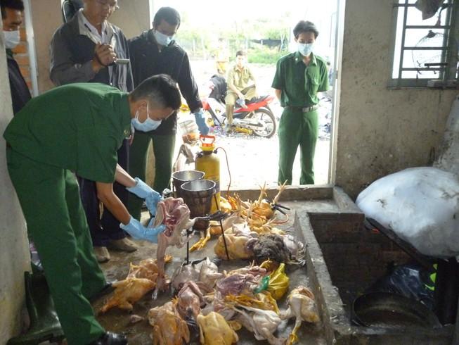 Bắt hàng chục ngàn con gà giống Trung Quốc lậu