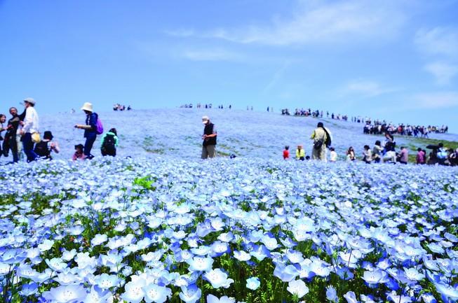Căng thẳng Triều Tiên, khách Việt vẫn đến Hàn Quốc
