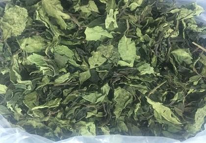 Bắt 2,5 tấn ma túy 'lá khat' cực độc tại Việt Nam
