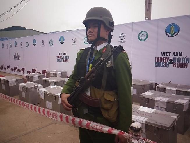 Lần đầu tiên Việt Nam tiêu hủy hơn 2.000 kg ngà voi