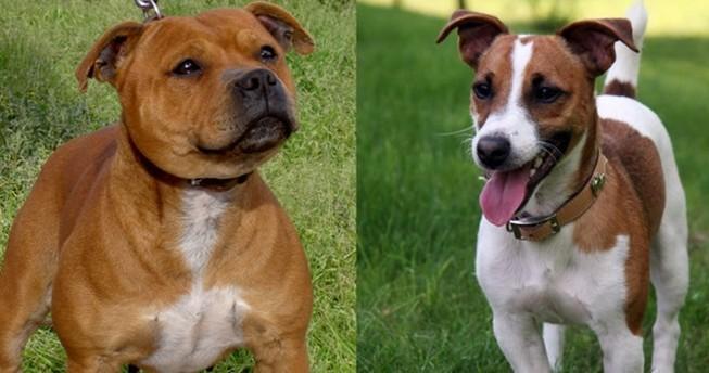 Một phụ nữ bị chính hai con chó nuôi ăn thịt sau khi qua đời