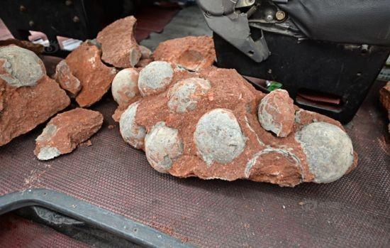 Trung Quốc: Phát hiện hàng chục quả trứng khủng long dưới nền đường