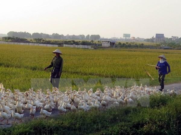 Nam Định chính thức công bố có dịch cúm gia cầm H5N6