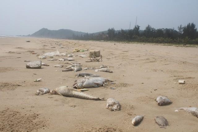 Các tỉnh hỗ trợ gấp gạo cho ngư dân vùng biển