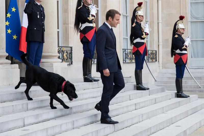 Nước Pháp có 'đệ nhất khuyển' - ảnh 3