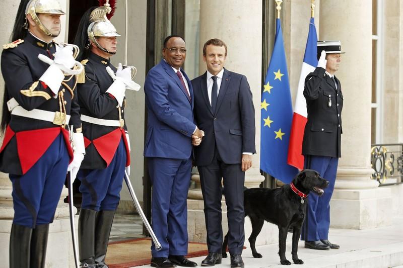 Nước Pháp có 'đệ nhất khuyển' - ảnh 5