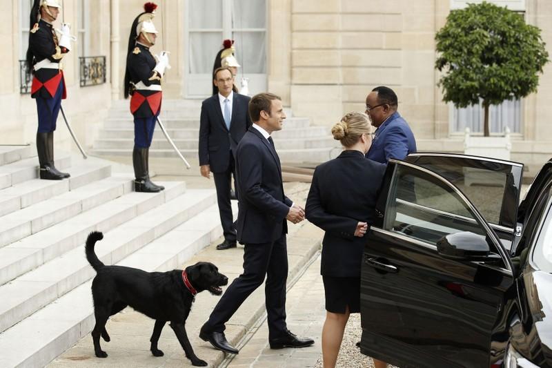 Nước Pháp có 'đệ nhất khuyển' - ảnh 4