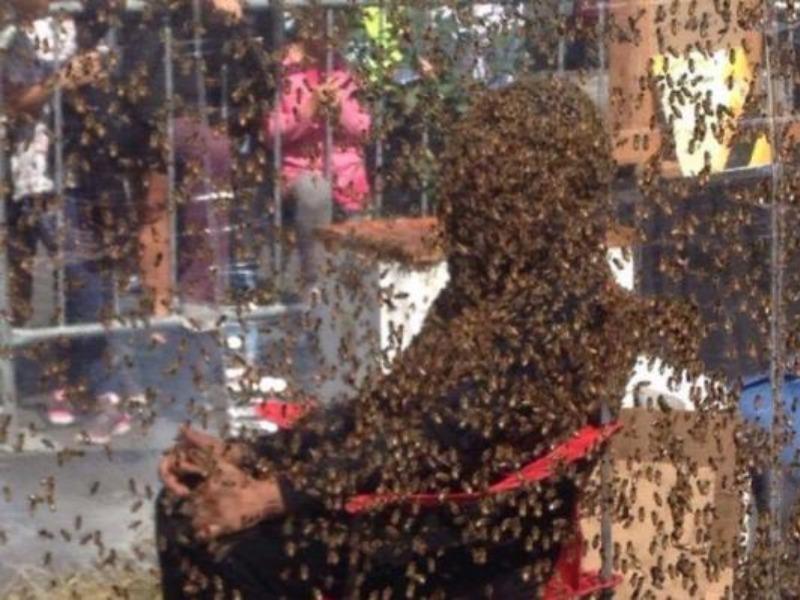 Lập kỷ lục để 100.000 ngàn con ong bu kín người - ảnh 1