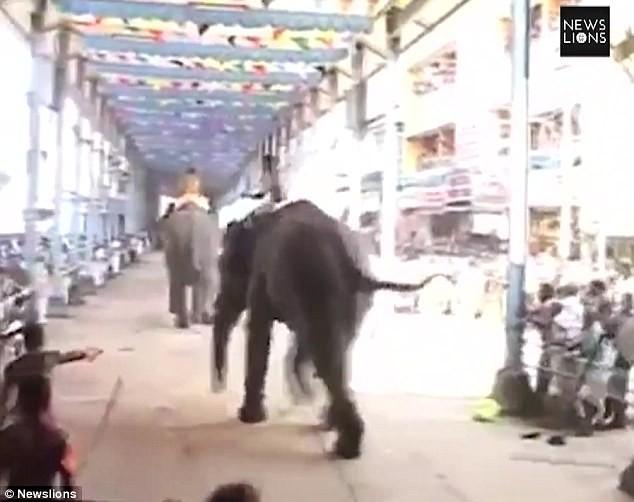 Clip: 'Voi điên' quật chết người tại lễ hội Ấn Độ - ảnh 1