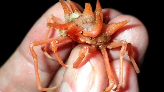 Phát hiện nhiều sinh vật biển kỳ dị ở vùng biển sâu Indonesia - ảnh 1
