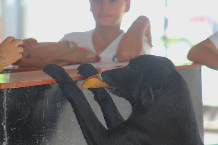 Chú chó thông minh mang 'tiền lá cây' đổi bánh quy mỗi ngày - ảnh 1