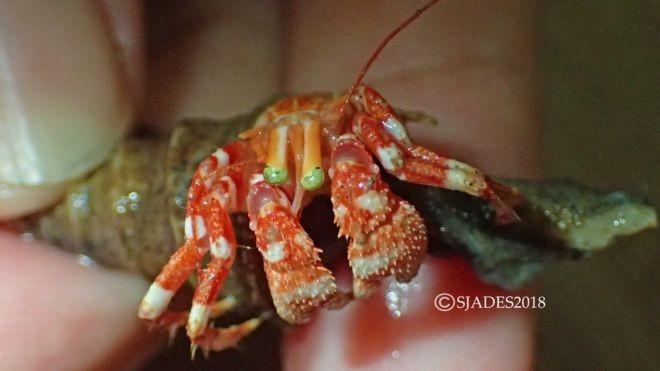 Phát hiện nhiều sinh vật biển kỳ dị ở vùng biển sâu Indonesia - ảnh 10