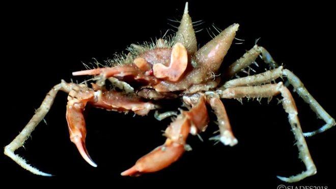 Phát hiện nhiều sinh vật biển kỳ dị ở vùng biển sâu Indonesia - ảnh 2