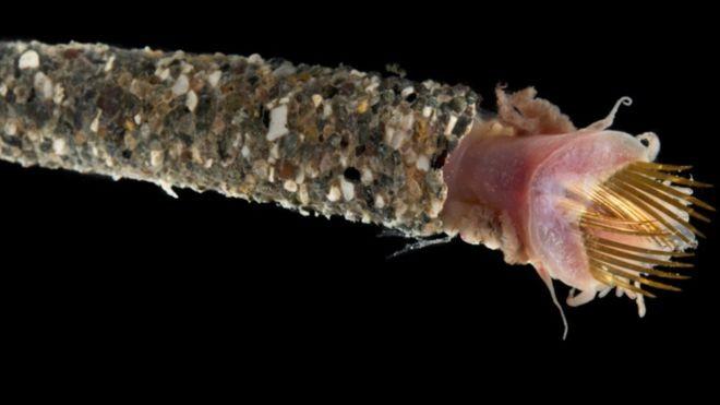 Phát hiện nhiều sinh vật biển kỳ dị ở vùng biển sâu Indonesia - ảnh 4