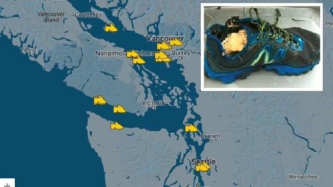 Bí ẩn hàng loạt bàn chân người dạt vào bờ biển Canada - ảnh 1