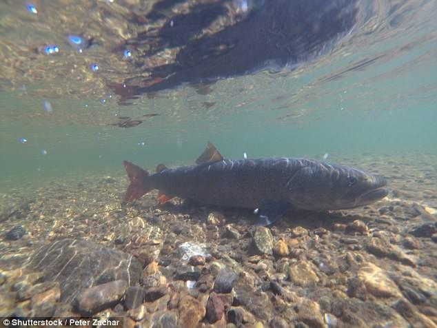 Trung Quốc cũng có thủy quái như ở hồ Loch Ness? - ảnh 2