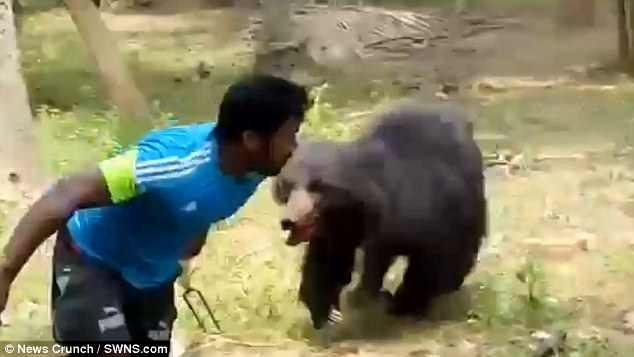 Kinh hoàng gấu hoang về làng vồ chết 2 vợ chồng - ảnh 1