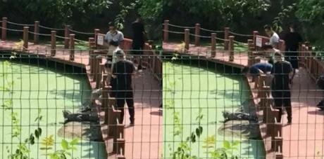 Du khách Trung Quốc hành hạ cá sấu để... chụp ảnh - ảnh 1