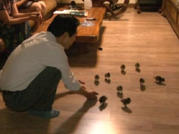 'Ông bố vịt' nuôi 21 chú vịt con gây sốt cộng đồng mạng - ảnh 3
