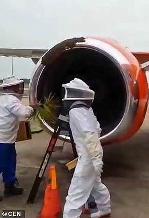 Máy bay hoãn chuyến vì ong tấn công động cơ  - ảnh 1