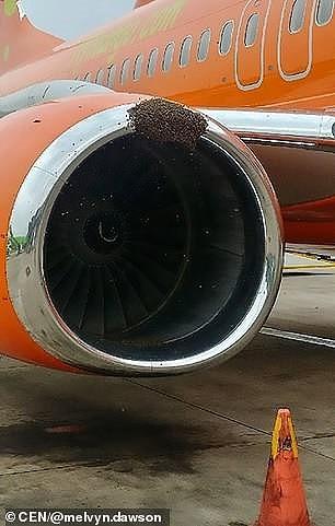 Máy bay hoãn chuyến vì ong tấn công động cơ  - ảnh 2