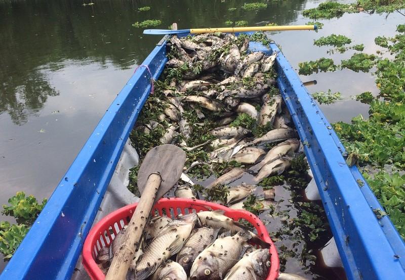 Bình Dương: Cá chết nổi trắng hồ Từ Vân - ảnh 2