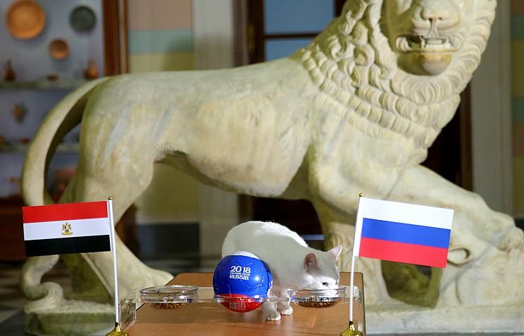 Mèo 'tiên tri' Achilles dự đoán Ai Cập ghi bàn nhưng Nga thắng - ảnh 2